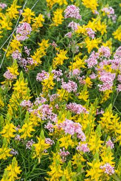 Wild Flowers-75