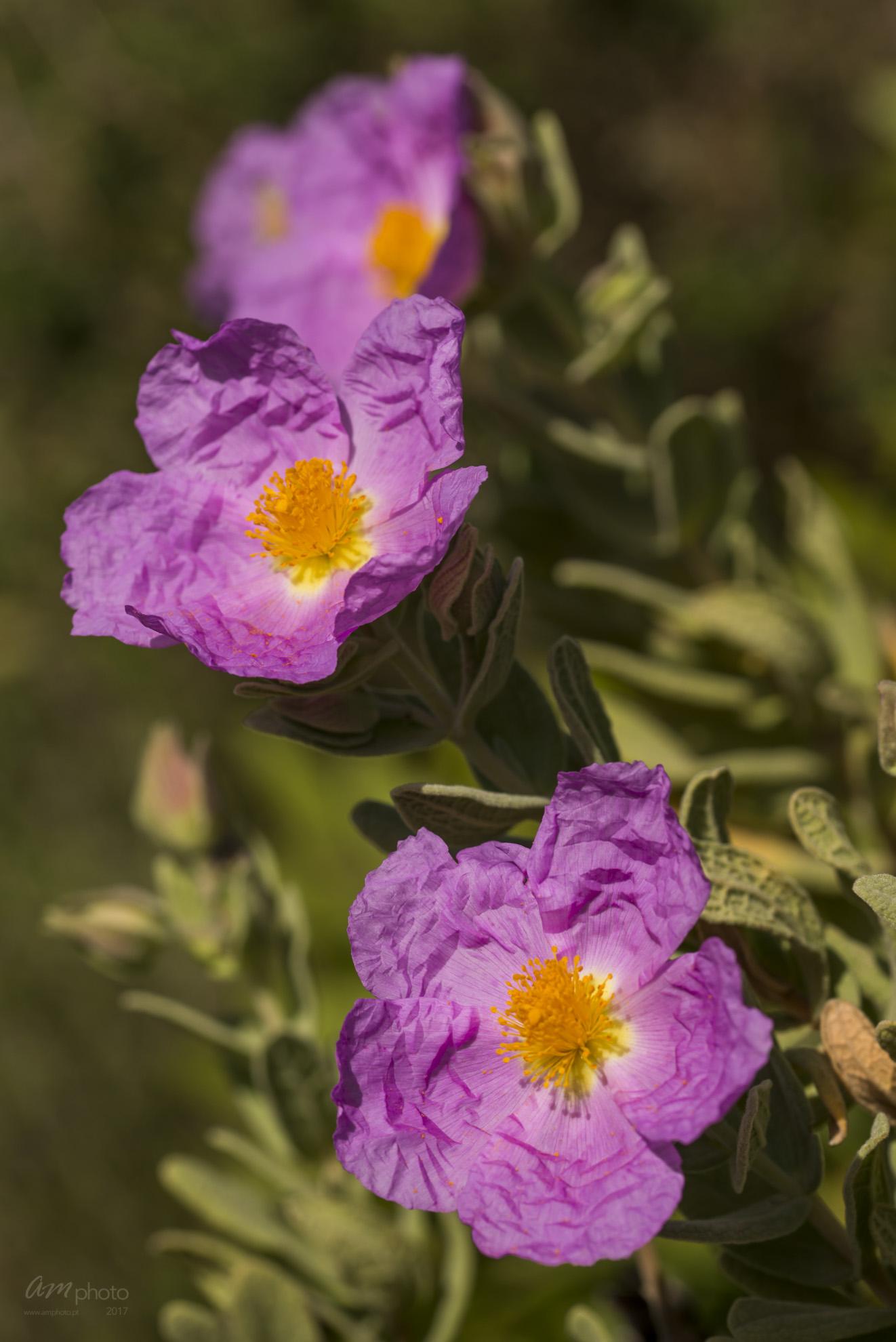 Wild Flowers-673