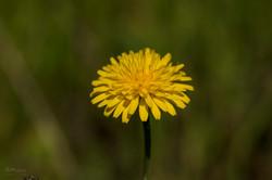 Wild Flowers-669