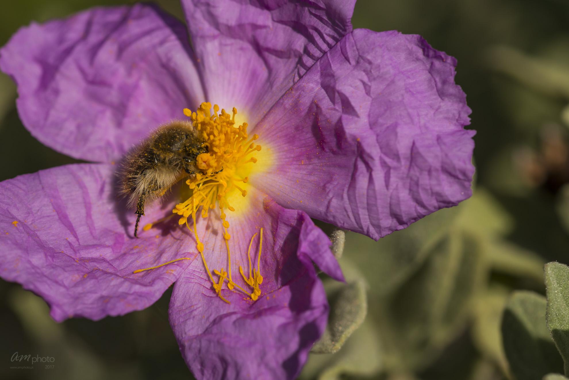 Wild Flowers-708