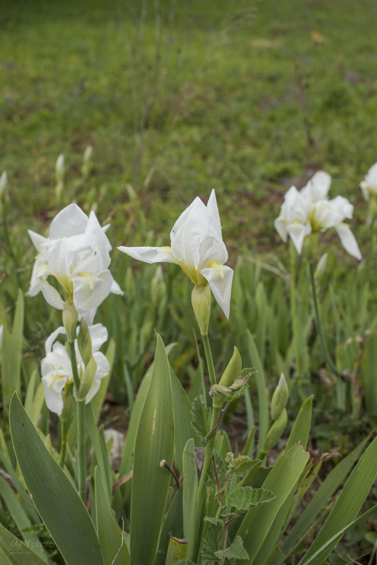 Wild Flowers-485