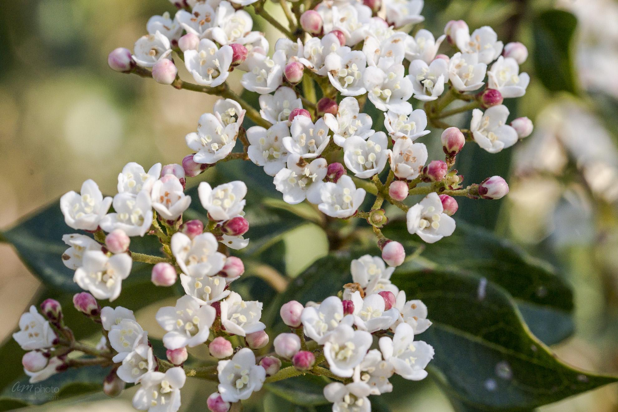 Wild Flowers-572