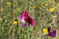 Wild Flowers-169