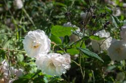 Wild Flowers-25