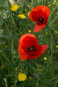 Wild Flowers-224