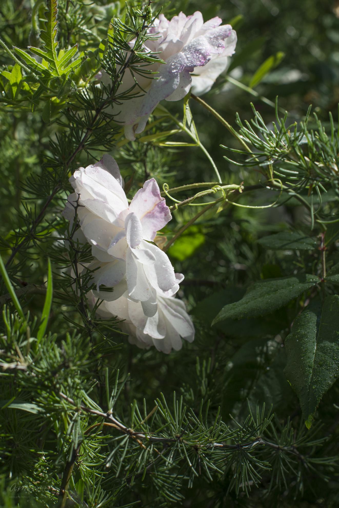 Wild Flowers-2-2