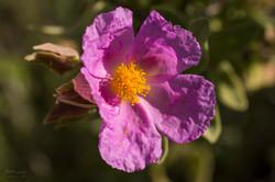Wild Flowers-672