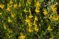 Wild Flowers-122