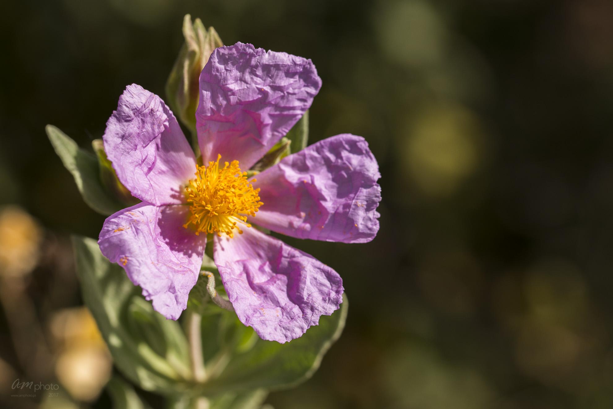 Wild Flowers-705