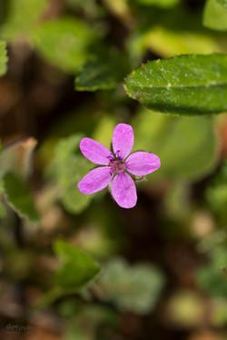 Wild Flowers-716