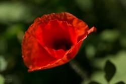 Wild Flowers-743