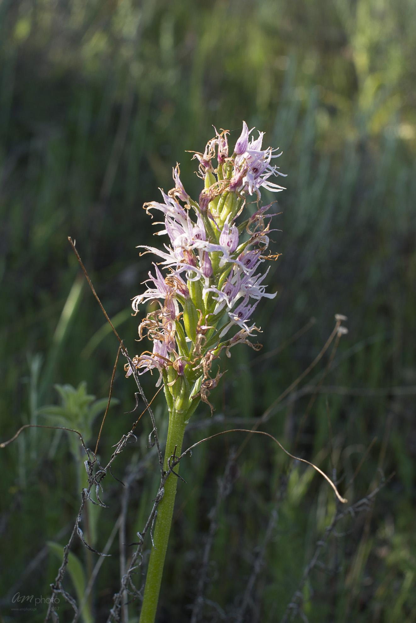 Wild Flowers-196