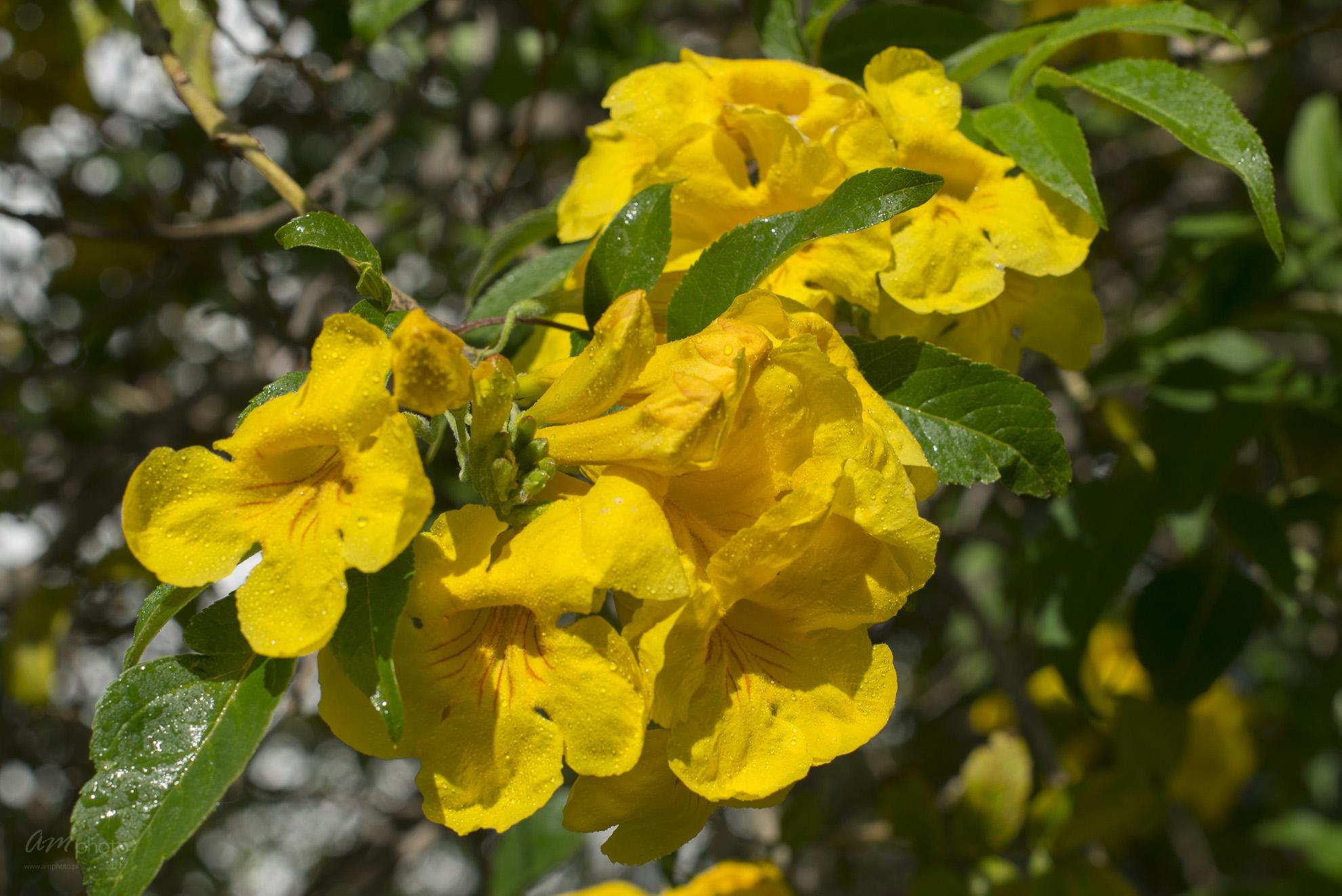 Wild Flowers-96