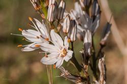 Wild Flowers-590