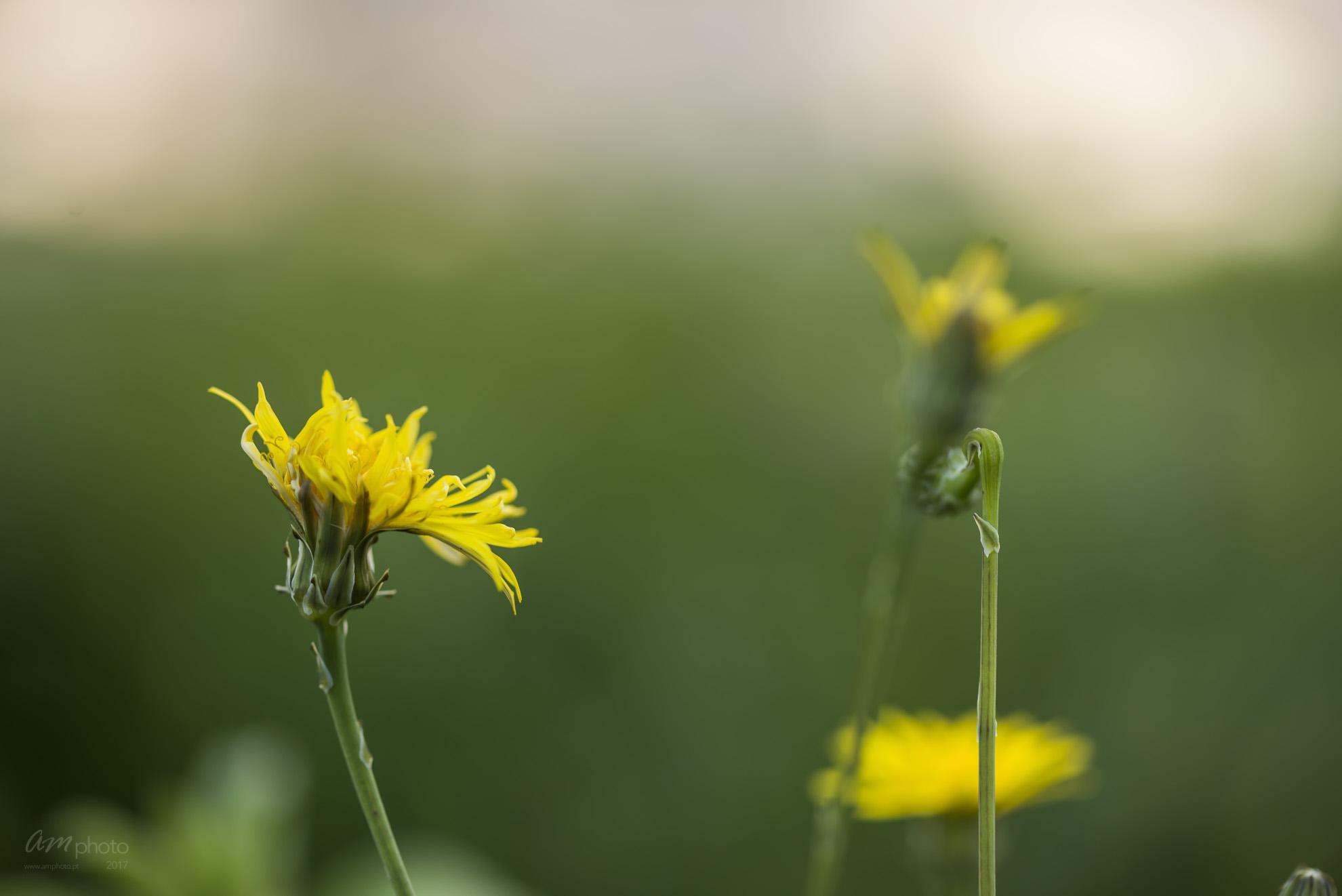 Wild Flowers-732