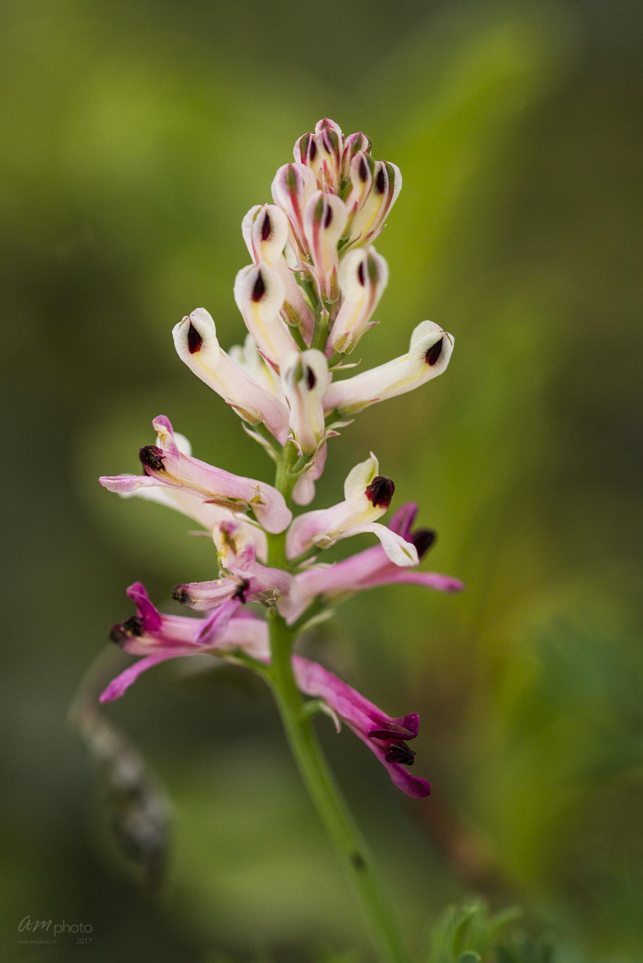 Wild Flowers-563