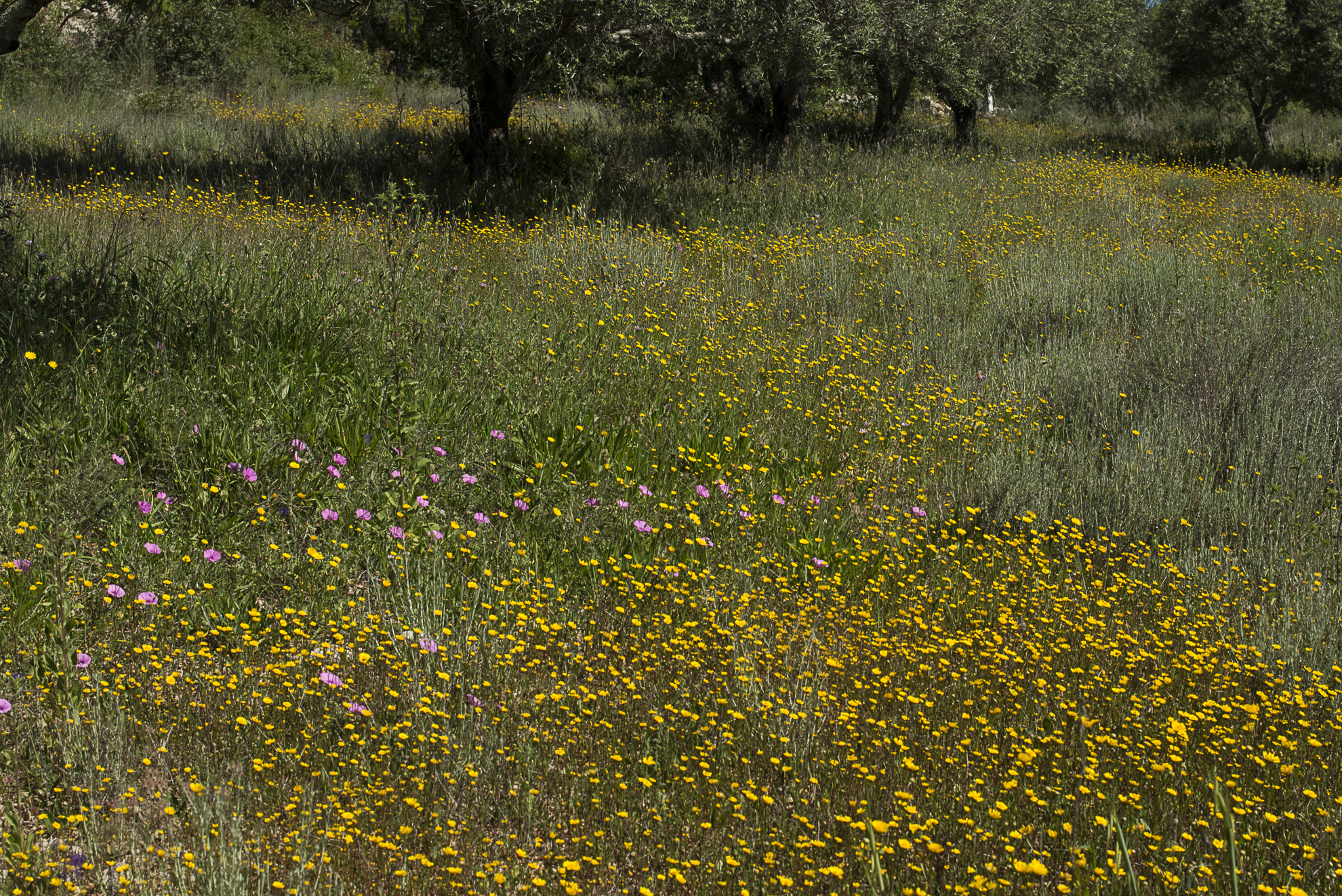 Wild Flowers-204