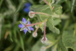 Wild Flowers-530
