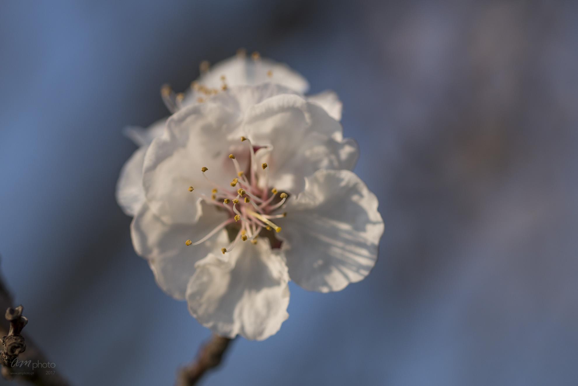 Wild Flowers-621