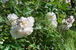 Wild Flowers-27