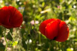 Wild Flowers-318