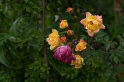 Wild Flowers-15
