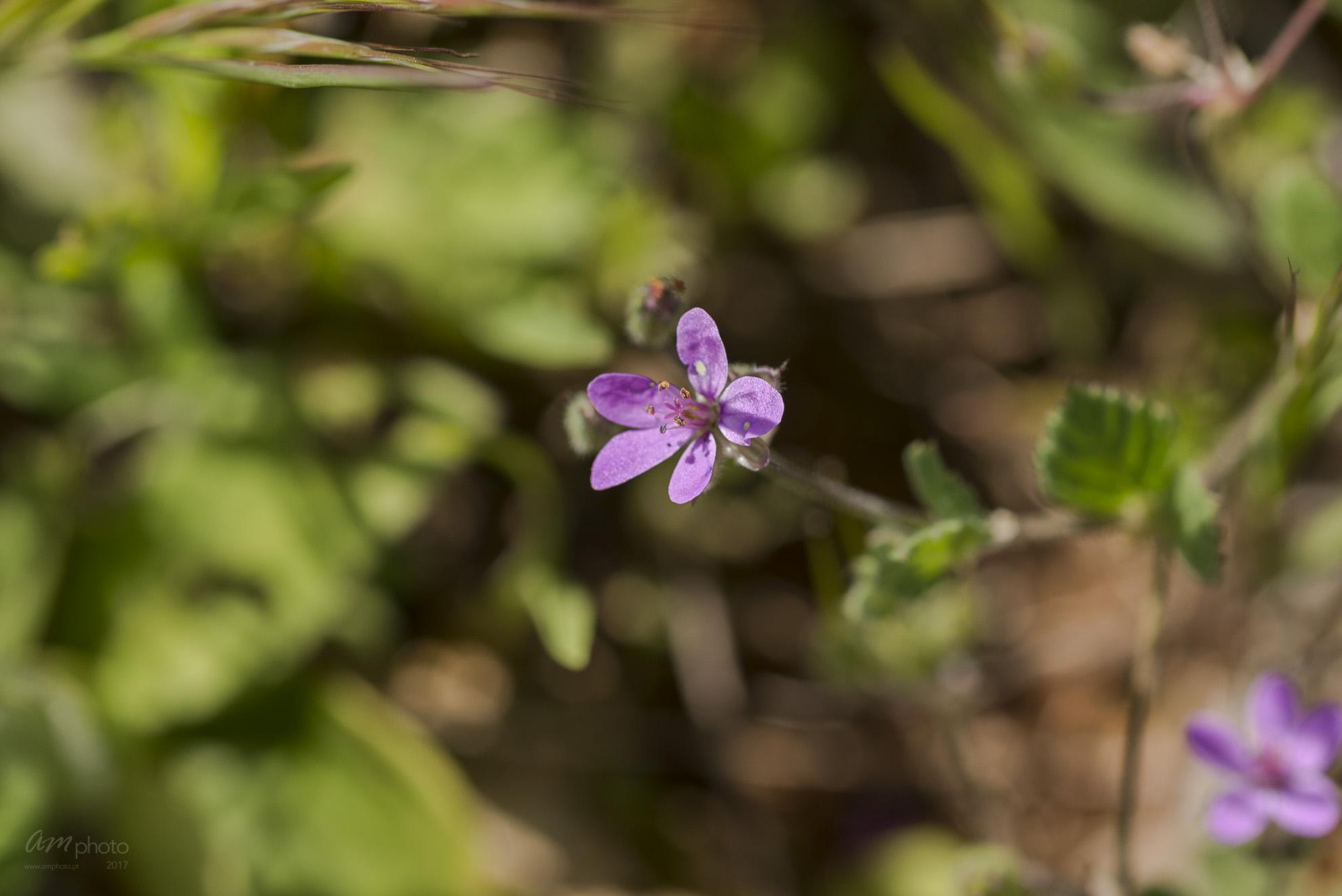 Wild Flowers-711