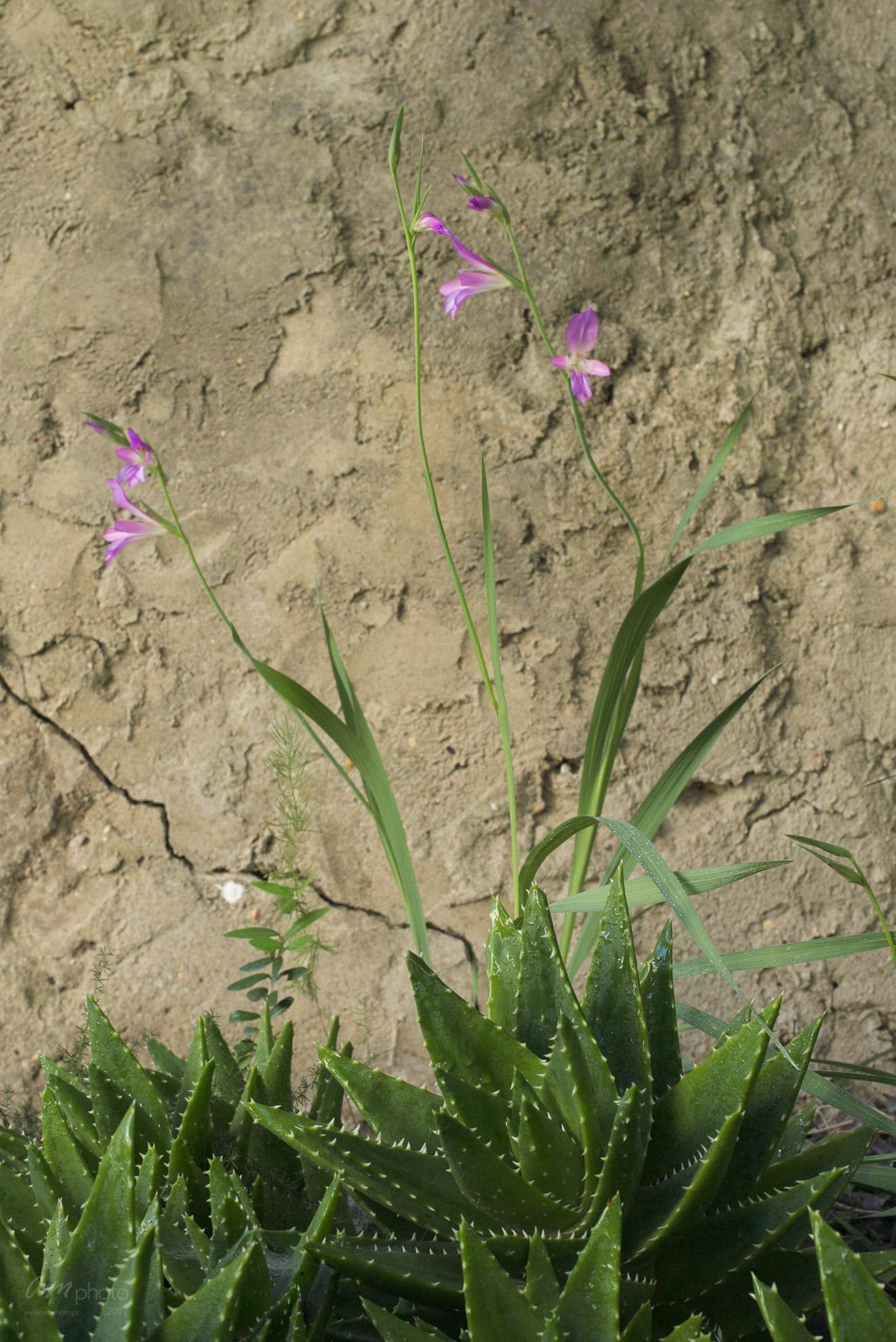 Wild Flowers-374