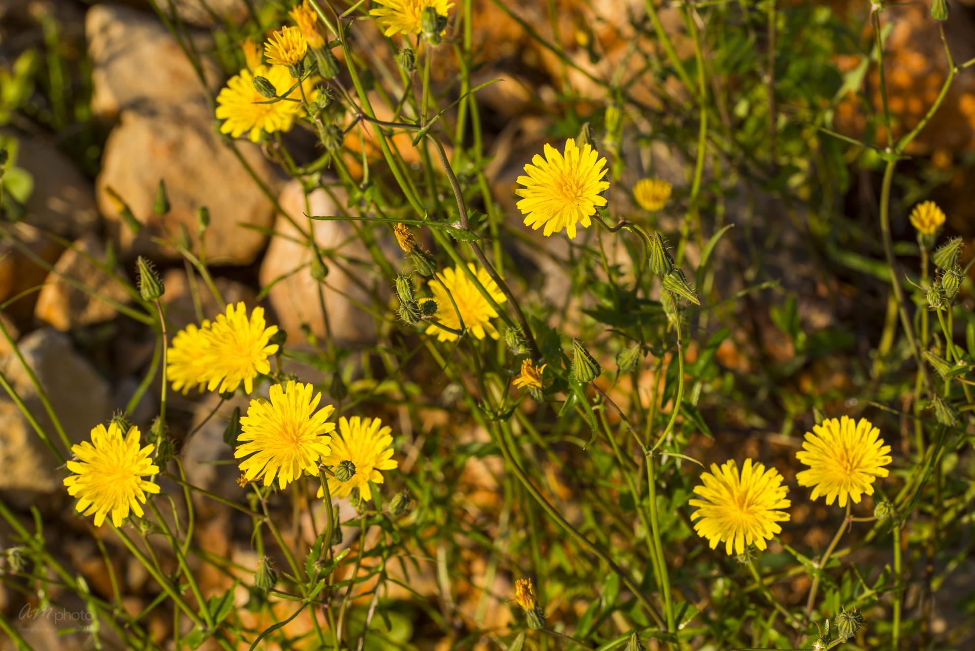 Wild Flowers-649