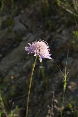 Wild Flowers-284