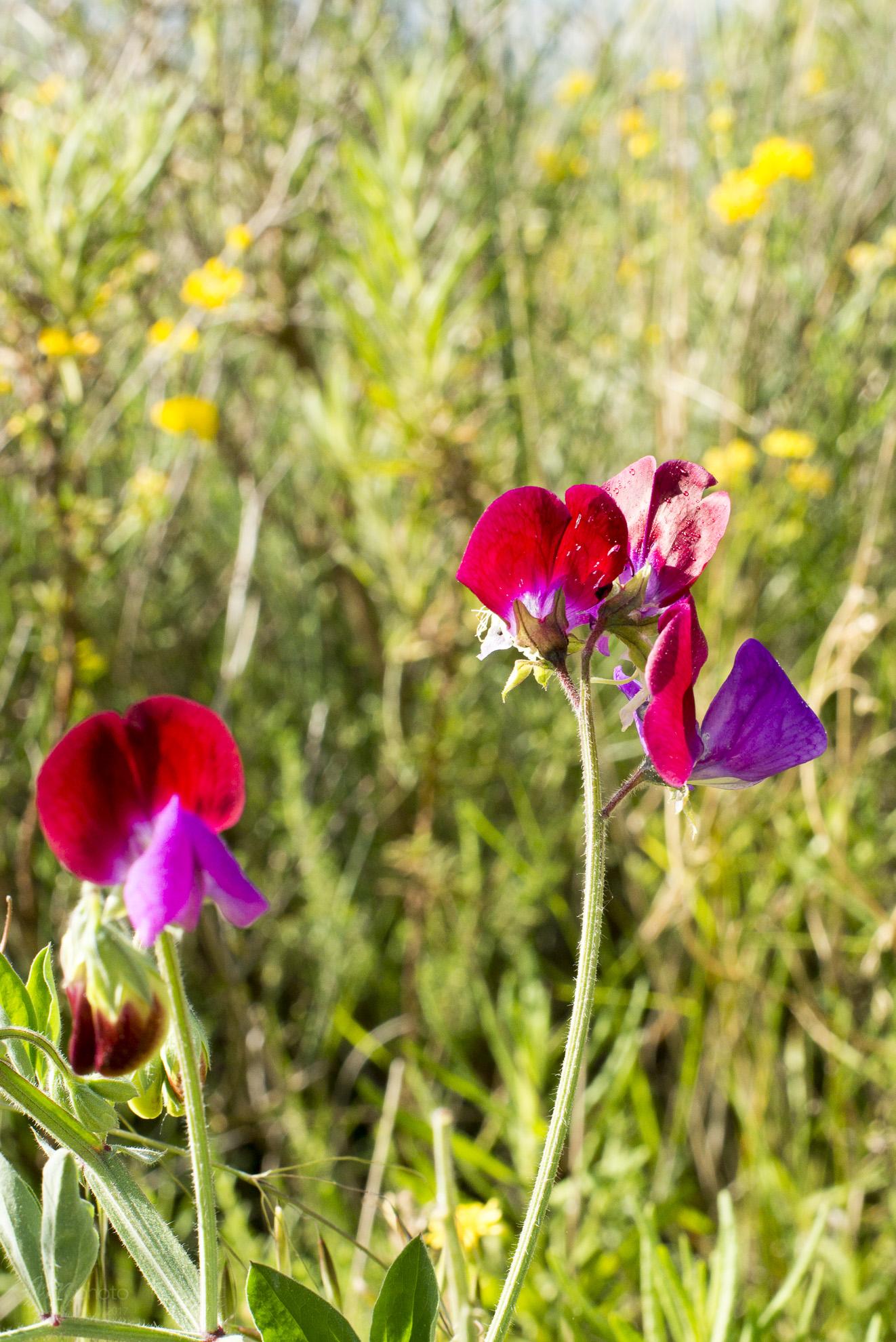 Wild Flowers-164