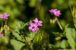 Wild Flowers-658