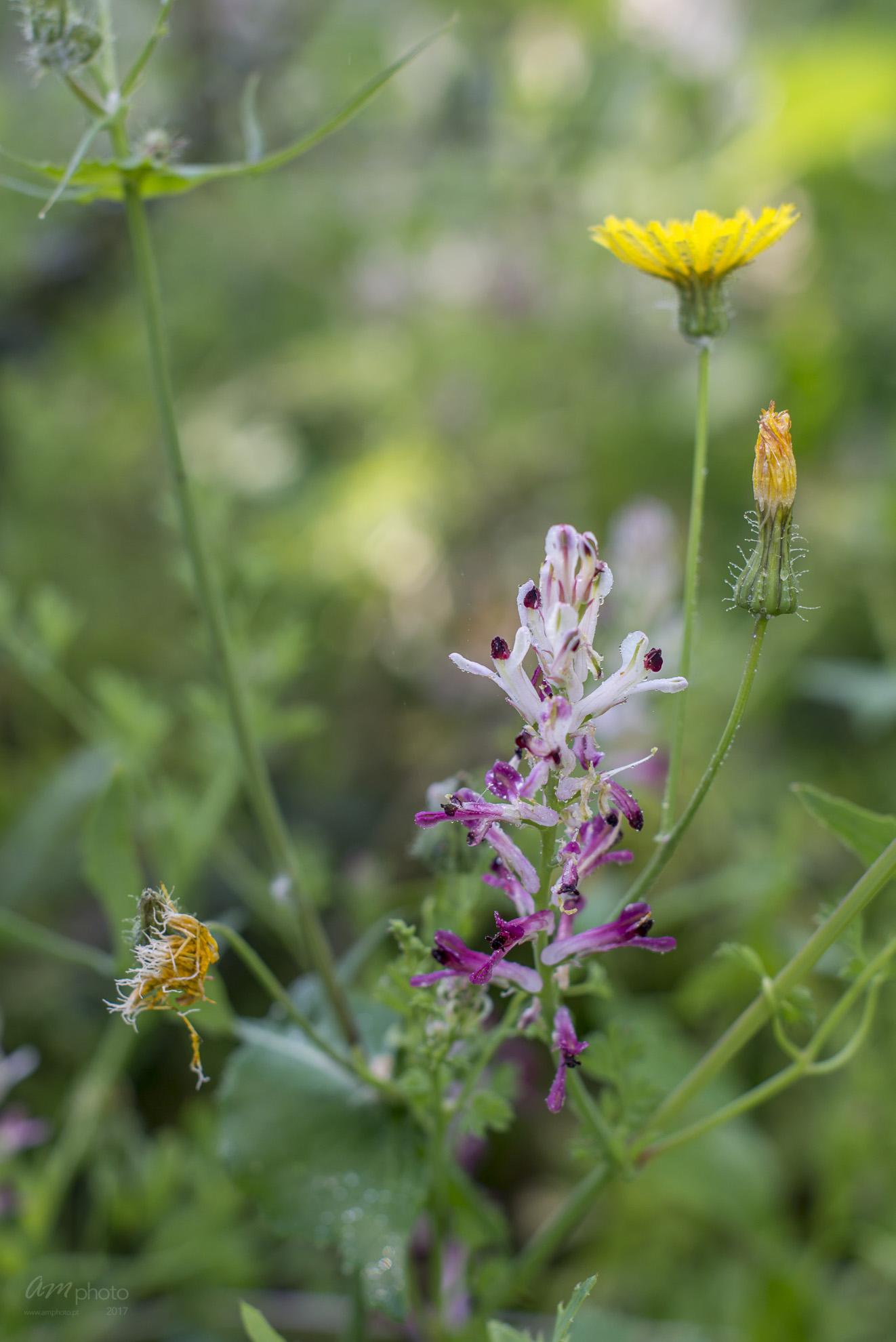 Wild Flowers-407