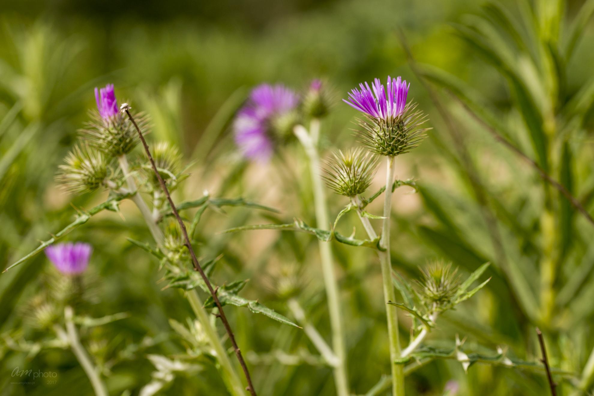 Wild Flowers-520