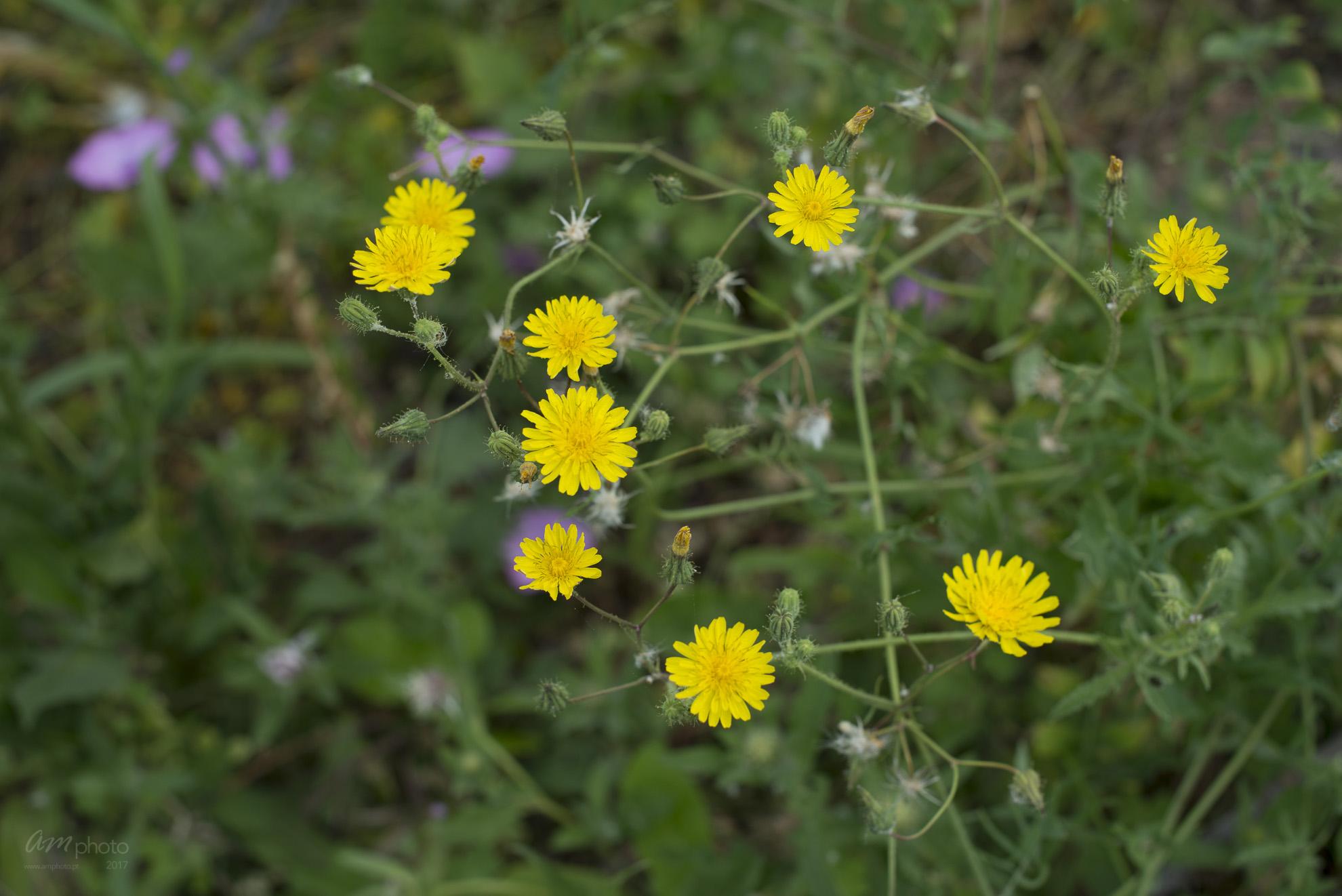 Wild Flowers-219