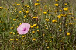 Wild Flowers-142