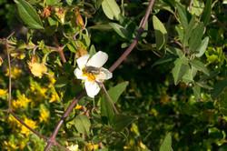 Wild Flowers-157