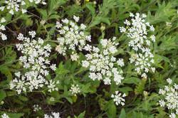 Wild Flowers-65