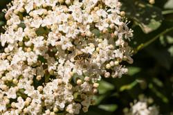 Wild Flowers-577
