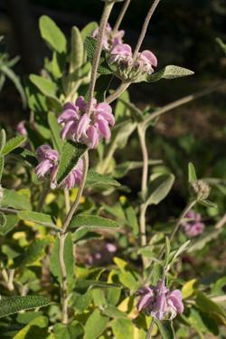 Wild Flowers-294