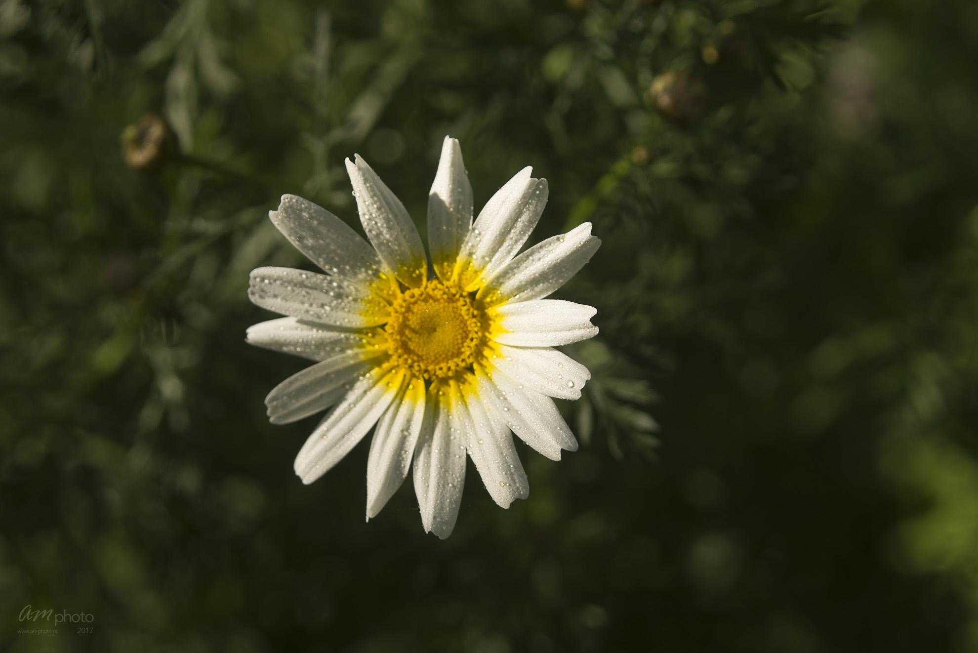 Wild Flowers-338