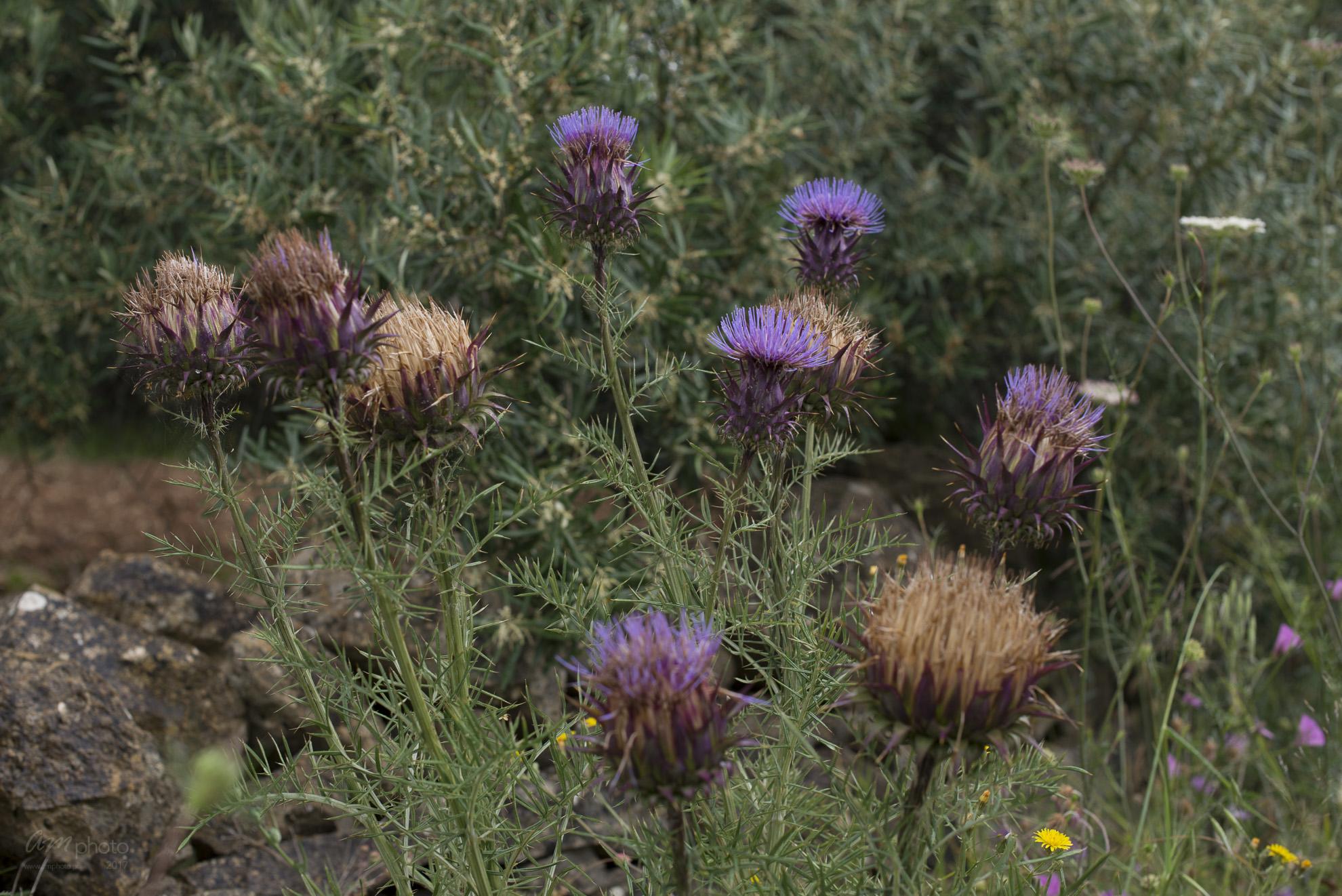 Wild Flowers-82