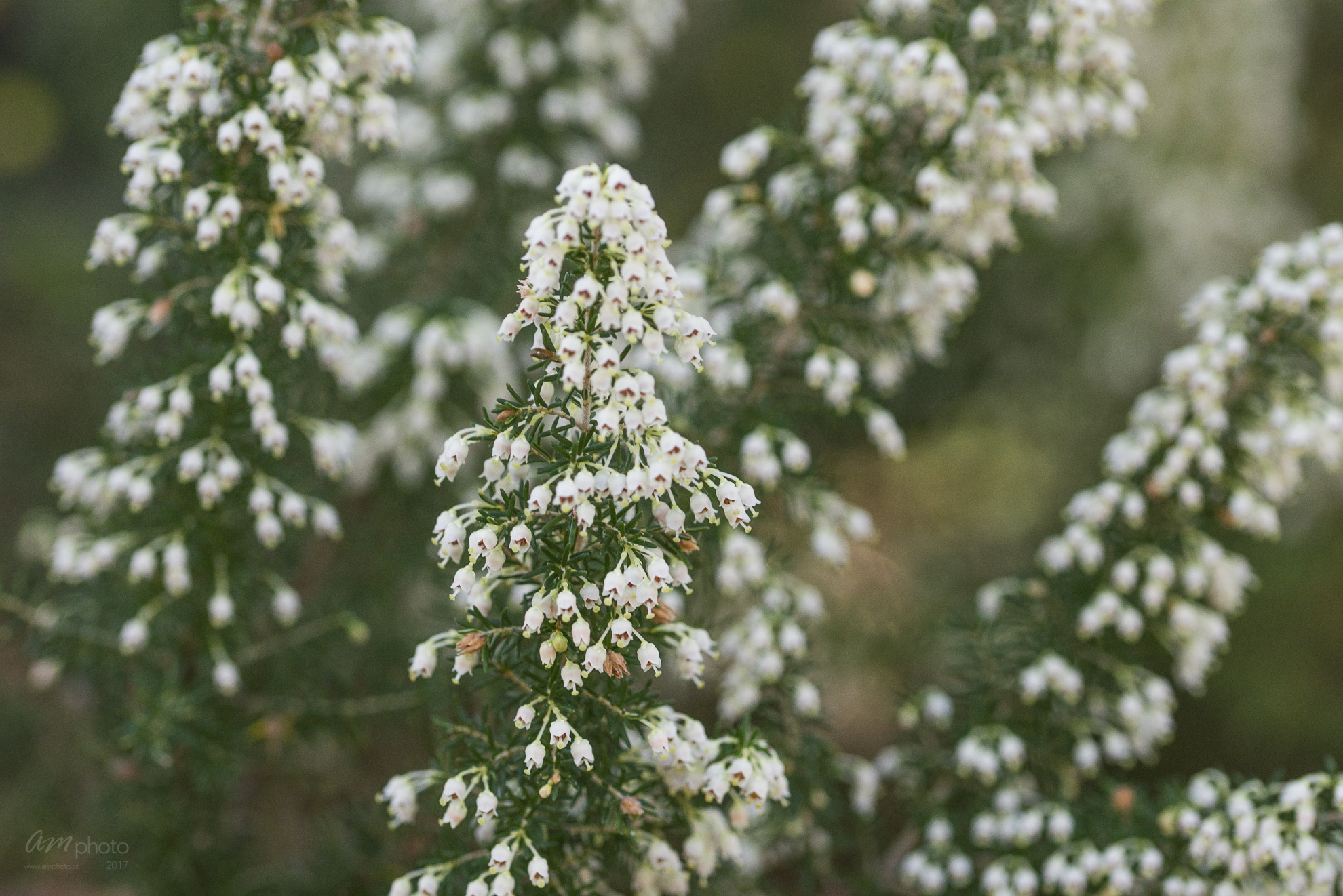 Wild Flowers-571