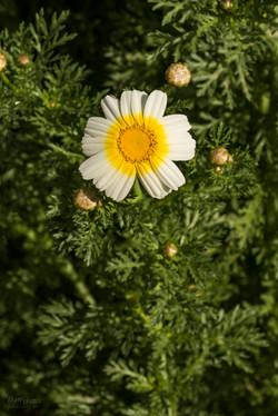 Wild Flowers-661