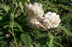 Wild Flowers-29