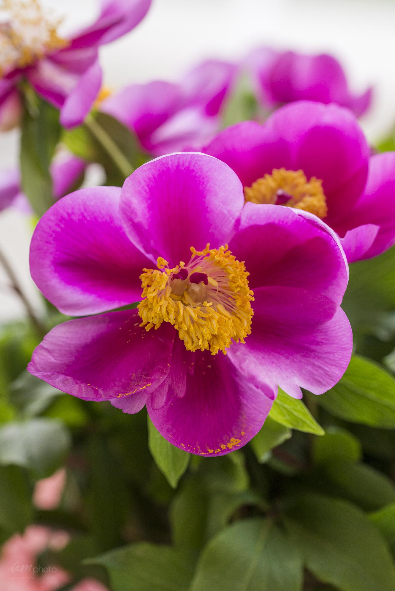 Wild Flowers-540