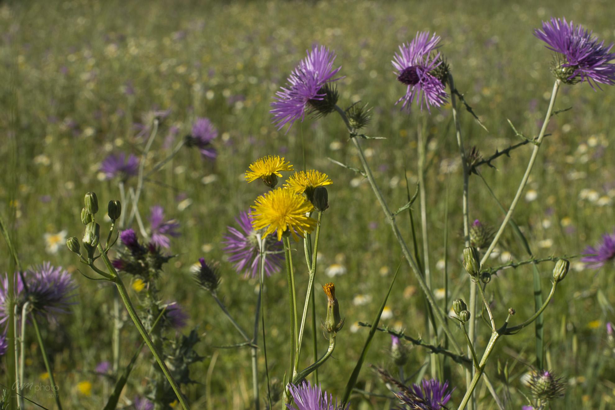 Wild Flowers-276