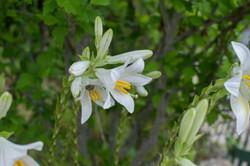 Wild Flowers-2