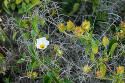 Wild Flowers-112