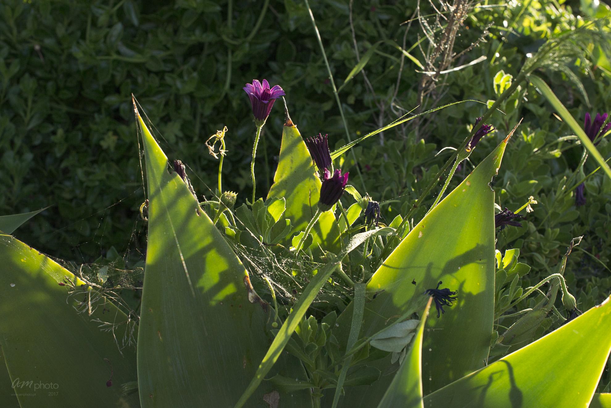 Wild Flowers-234